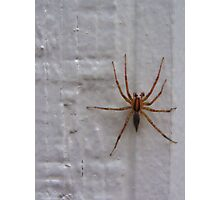 Siding Spider not so Sly Photographic Print