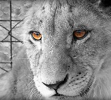 Lion Cub by fernblacker