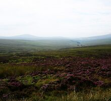 Purple Heath - Wicklow Mountains, Ireland by Marilyn Harris