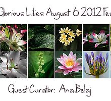 All Glorious Lilies Features August 6 2012 by Marilyn Cornwell