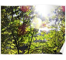 Autumn Sunlight Through The Leaves Poster