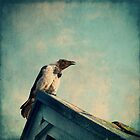 The Crow by Carina514