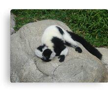 """Black and White Ruffled Lemur""  by Carter L. Shepard Canvas Print"
