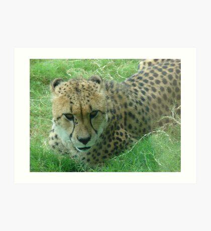 """Cheetah""  by Carter L. Shepard Art Print"