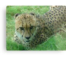 """""""Cheetah""""  by Carter L. Shepard Canvas Print"""