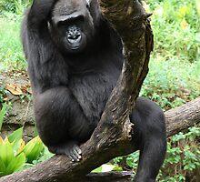 """""""Gorilla 1""""  by Carter L. Shepard by echoesofheaven"""