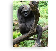"""Gorilla 1""  by Carter L. Shepard Canvas Print"