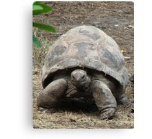 """Tortoise""  by Carter L. Shepard Canvas Print"