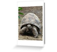 """""""Tortoise""""  by Carter L. Shepard Greeting Card"""