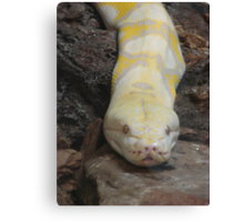 """""""White Boaconstrictor""""  by Carter L. Shepard Canvas Print"""