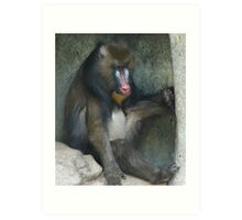 """Baboon""  by Carter L. Shepard Art Print"