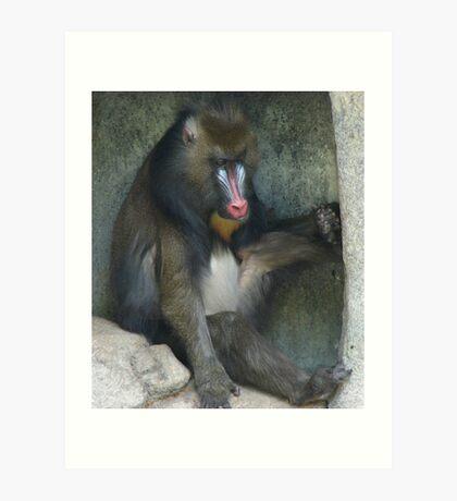 """Baboon""  by Carter L. Shepard Art Print"