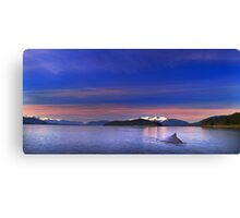 Humpback Solitude Canvas Print