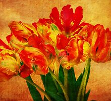 Nostalgic Tulips by KasiaDesign