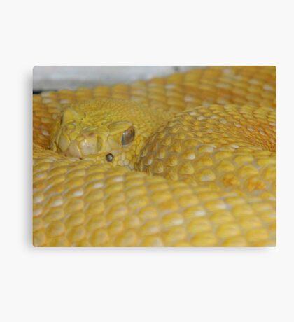 Albino Rattlesnake Canvas Print