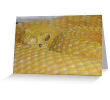 Albino Rattlesnake Greeting Card