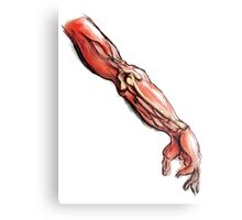 Arm Anatomy Metal Print