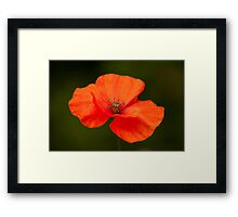 Single Poppy Flower Framed Print