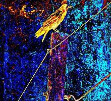 Crow On A Wire X3 by SianStargazer