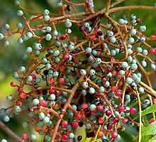 Autumn Berries For The Birds by © Loree McComb