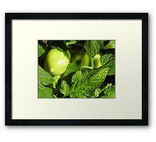 Green, Green Vegatables Of Home Framed Print
