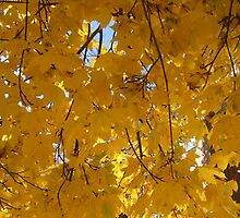 Fall Leaves Yellow  by elizabethtarde