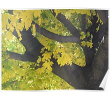 Fall Leaves Yellow Tree Poster