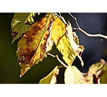 Still on the branch Photographic Print