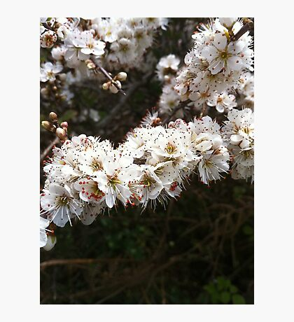Macro flower, pure and white! Photographic Print