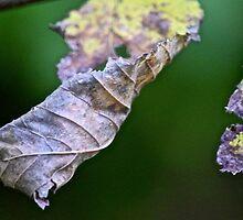 Crumpled leaves by sbackman