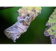 Crumpled leaves Photographic Print