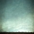Birds on a hot tile roof by Citizen