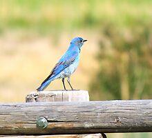 A Bird's Paradise by Rachel Meyer