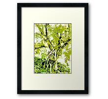 Vibrant Growth  Framed Print