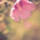 Nectar by cmcdonald