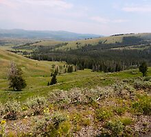 Wide Open Spaces in Yellowstone by Rachel Meyer