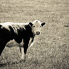Irvine the Cow by cmcdonald