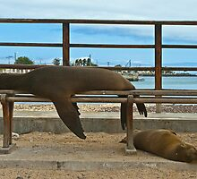 Sea Lions & Pup by bulljup
