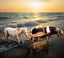 Pony Dreams by Ticker