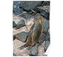 Sea Lions11 Poster