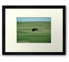 Monarch of the Plains Framed Print