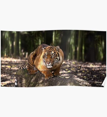 Big Paws, Sharp Claws Poster