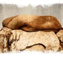 Stellar Sea Lion, Belle Chain Islets by toby snelgrove  IPA