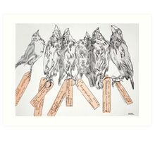 galapagos finches Art Print
