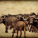 IN ABUNDANCE -  The Buffalo - Syncerus caffer  by Magriet Meintjes