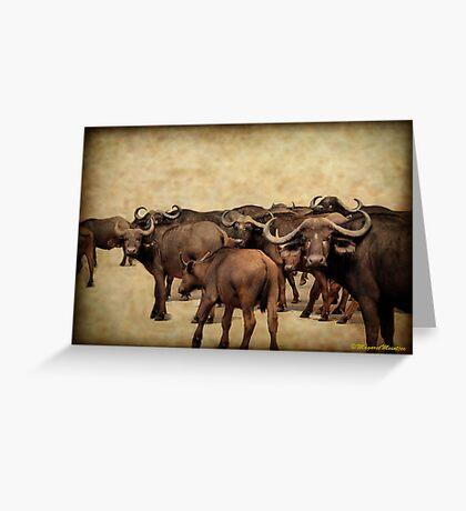 IN ABUNDANCE -  The Buffalo - Syncerus caffer  Greeting Card