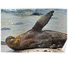 Sea Lion & Pup7 Poster