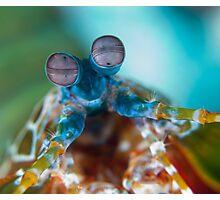Mantis shrimp Photographic Print