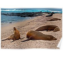 Sea Lions14 Poster