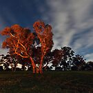 Bonfire Glow by Bill  Robinson